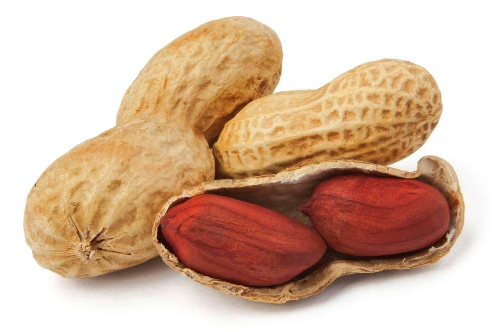 Nut-beer